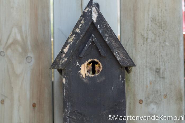 Fotografie in praktijk: Net geboren vogeltjes voor opening vogelhuisje