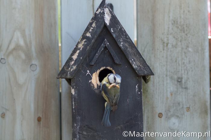 Fotograferen in praktijk - Onscherpe vogel door beperkte scherptediepte
