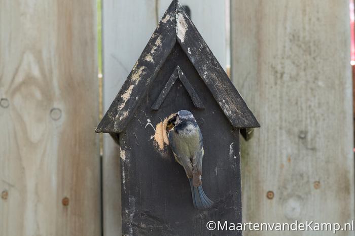 Fotograferen in praktijk - Scherpe vogel