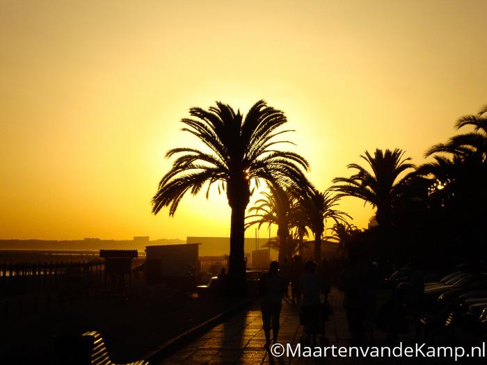 Zonsondergang met palmboom