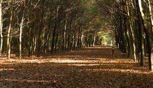 Het Sprielderbos