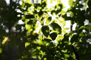 Zonlicht tegen bladerdek