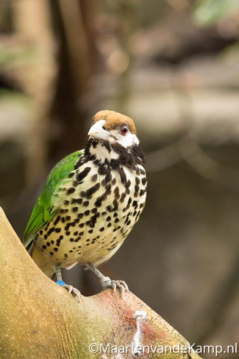 Vogels in de mangrove
