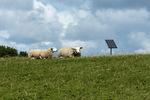 Schapen op zonne-energie