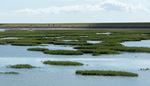 Begroeiing Waddendijk